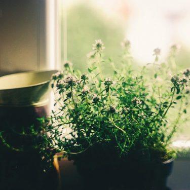 5_conseils_de_décoration_intérieure_pour_votre_maison_au_printemps