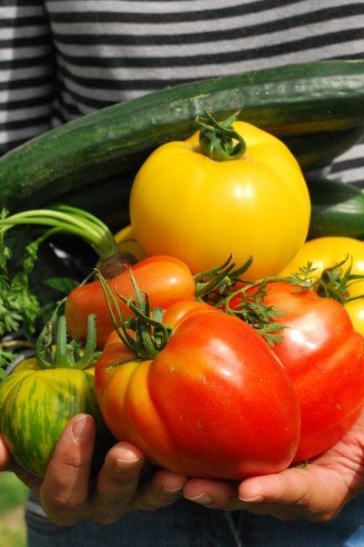 Comment_planter_un_jardin_comestible_facile