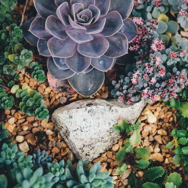 Jardin_de_succulentes_sur_le_thème_de_la_plage