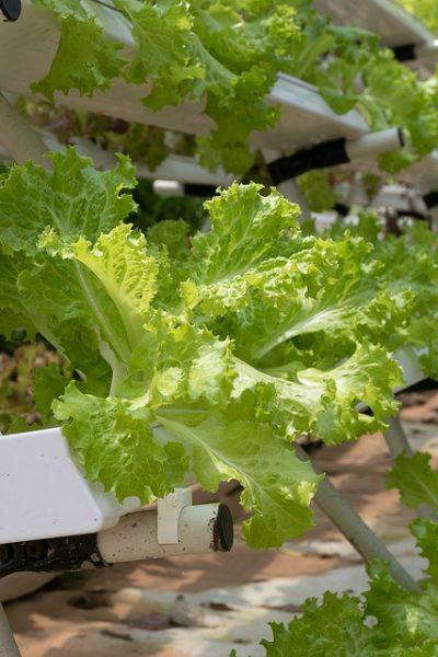 hydroponics-4255403_960_720