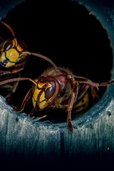 insect-3270233_960_720