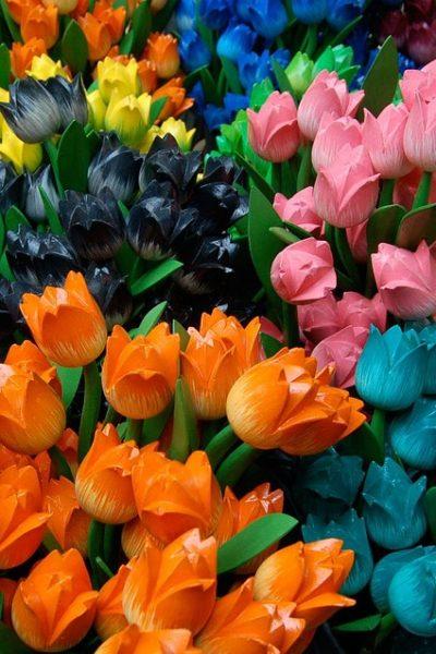 tulips-2849_960_720